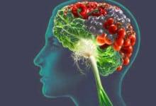 Photo of الاطعمة التي تقوي وظائف الدماغ