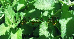 bama-herb