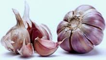 garlic-aging