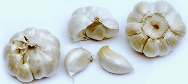 garlic-bulb