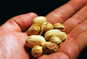 handful_of_pistachio_nuts