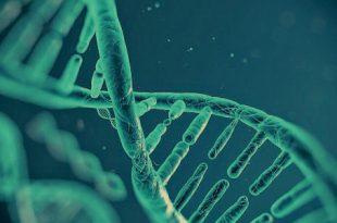 البصمة الوراثية