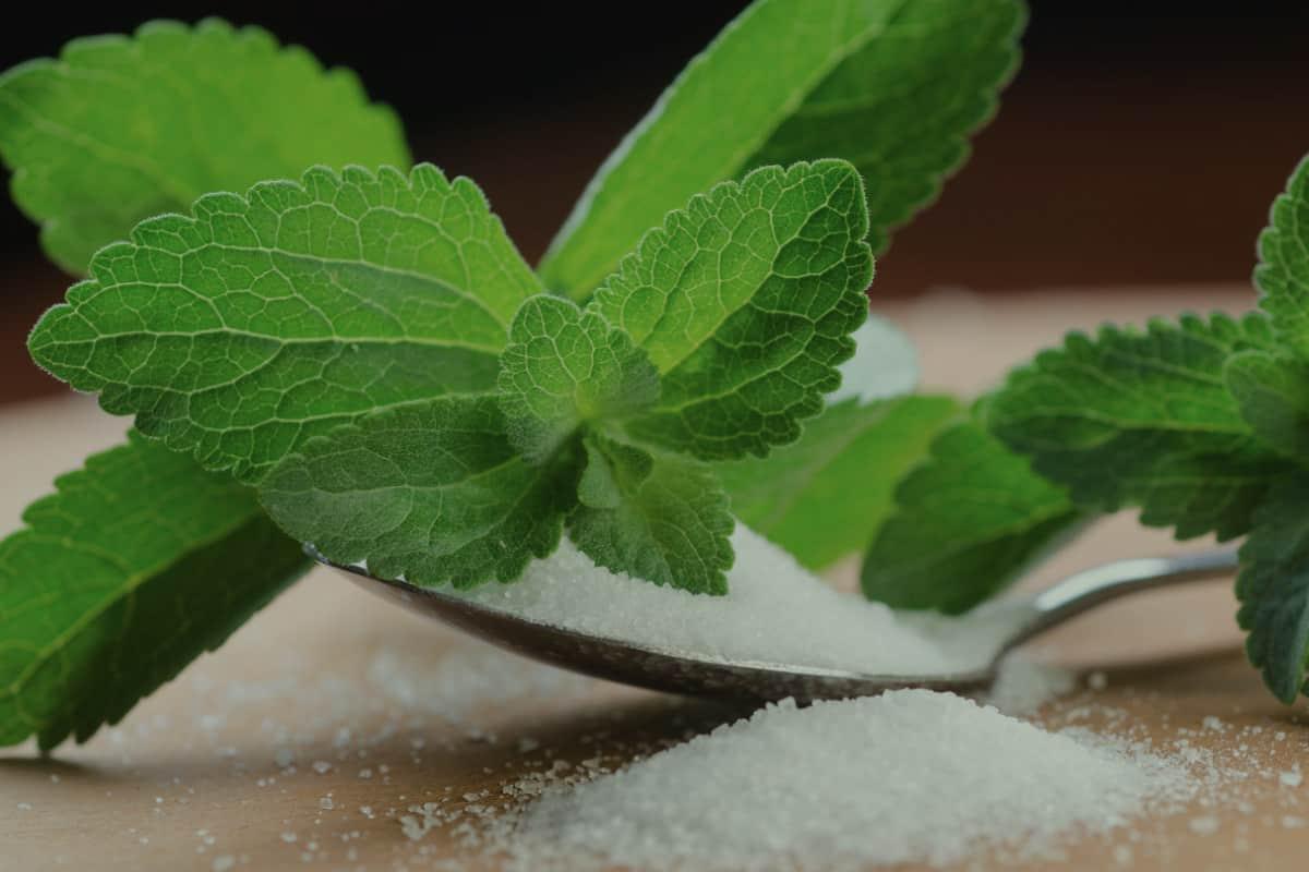 سكر ستيفيا اضرار سكر ستيفيا وفوائده صحتنا